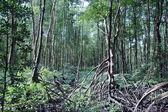 Bosque de manglar — Foto de Stock