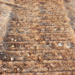 Tractor trail in brown clay - Foto Stock