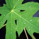 Fresh green leaves — Stock Photo #16330823