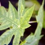 Fresh green leaves — Stock Photo #16487561