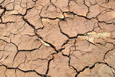 Dry soil cracks — Stock Photo