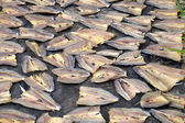 Patterns of dried fish — Stock Photo