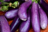Eggplant fruit — Stock Photo