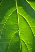 Textura hojas — Foto de Stock
