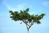 Big tree — Stock Photo
