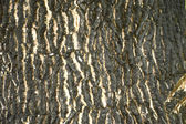 Bark tree — Stock Photo