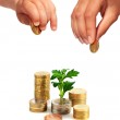Hands with coins and plant. — Stock Photo