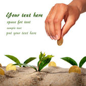 Plant and money. — Stock Photo