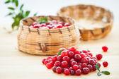Fresh red cranberries — Stock Photo