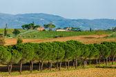 Road with pine trees Tuscany — Stock Photo