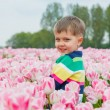 Boy in tulip field - Stock Photo