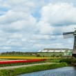 Springtime In Holland — Stock Photo #20874565
