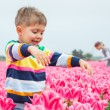 Boy In Tulip Field — Stock Photo