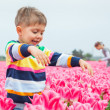 Royalty-Free Stock Photo: Boy In Tulip Field