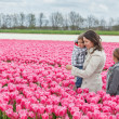 Family and tulips field — Stock Photo