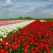 Stock Photo: Springtime In Holland