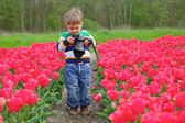 Tulip photographer — Stock Photo