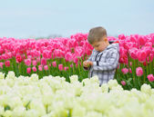 Boy In Tulip Field — Stock Photo