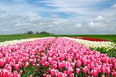 Springtime In Holland — Stock Photo