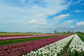 Springtime In Holland — Stock Photo