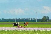 Krajobraz w holandii — Zdjęcie stockowe