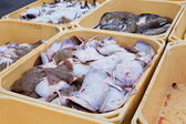 Fish in containers — Stock Photo