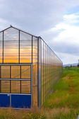 Greenhouse geothermal — Stock Photo