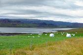 Icelandic Rural Landscape. — Stock Photo