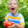 Handsome little boy holding tomato in green garden — Stock Photo #26633963