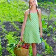Stock Photo: Vegetable garden - little gardener with basket of organic carrots and beets