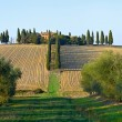 Stock Photo: Landscape in tuscany.