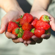 Hands holding strawberries — Stock Photo #26804031