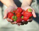 Manos sujetando las fresas — Foto de Stock