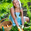 Vegetable garden - little gardener girl collects vegetables in a basket organic carrots and beets — Stock Photo