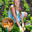 Stock Photo: Vegetable garden - little gardener girl collects vegetables in a basket organic carrots and beets