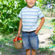 Vegetable garden - portrait of little gardener boy with a basket of organic zucchini and tomatoes — Stock Photo #27054105