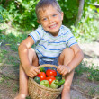 Vegetable garden - portrait of little gardener boy with a basket of organic zucchini and tomatoes — Stock Photo #27054127