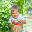Vegetable garden - portrait of little gardener boy with a basket of organic zucchini and tomatoes — Stock Photo #27054133