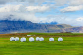 Paysage rural islandais. — Photo