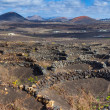 Viticulture winery Lanzarote. — Stock Photo