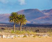 Landscape mountain in Lanzarote — Stock Photo