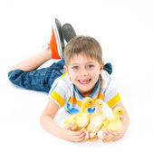 Boy with cute chickens — Stock Photo