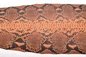 Python leather — Stock Photo
