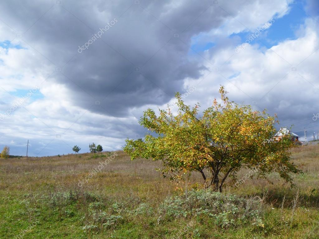 在字段中孤秋天一棵树
