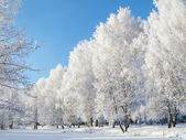 Winter landscape with frozen tree — Stock Photo
