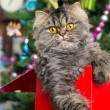 Persian kitten sitting in red box under Christmas tree — Stockfoto #38740751