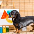 Dachshund artist near easel with its masterpiece — Stock Photo #38928389