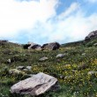 Постер, плакат: Mountain meadow in the Upper Engadine