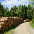 Stock Photo: Forestry in Erzgebirge