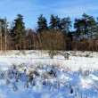 Panoramin winter — Stock Photo #18381157